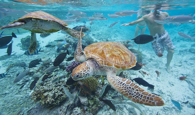 tahiti-sea-turtles.jpg