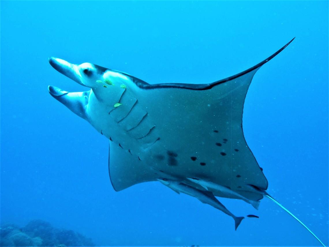 https://tahititourisme.uk/wp-content/uploads/2017/08/Bora-Bora-Reef-Discovery-3.jpg