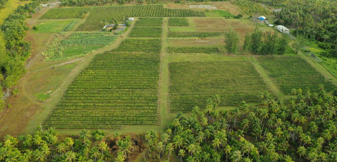 https://tahititourisme.uk/wp-content/uploads/2017/08/Vin-de-Tahiti_1140x550-min.png