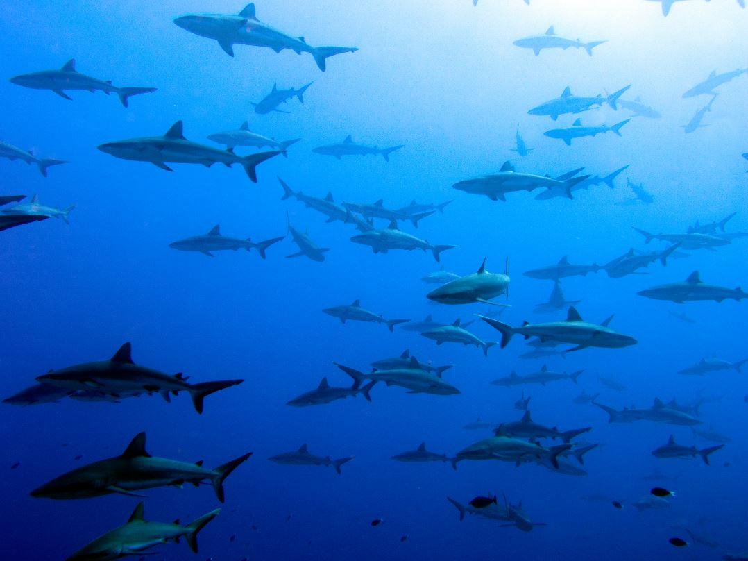https://tahititourisme.uk/wp-content/uploads/2018/09/original-diving-2.jpg