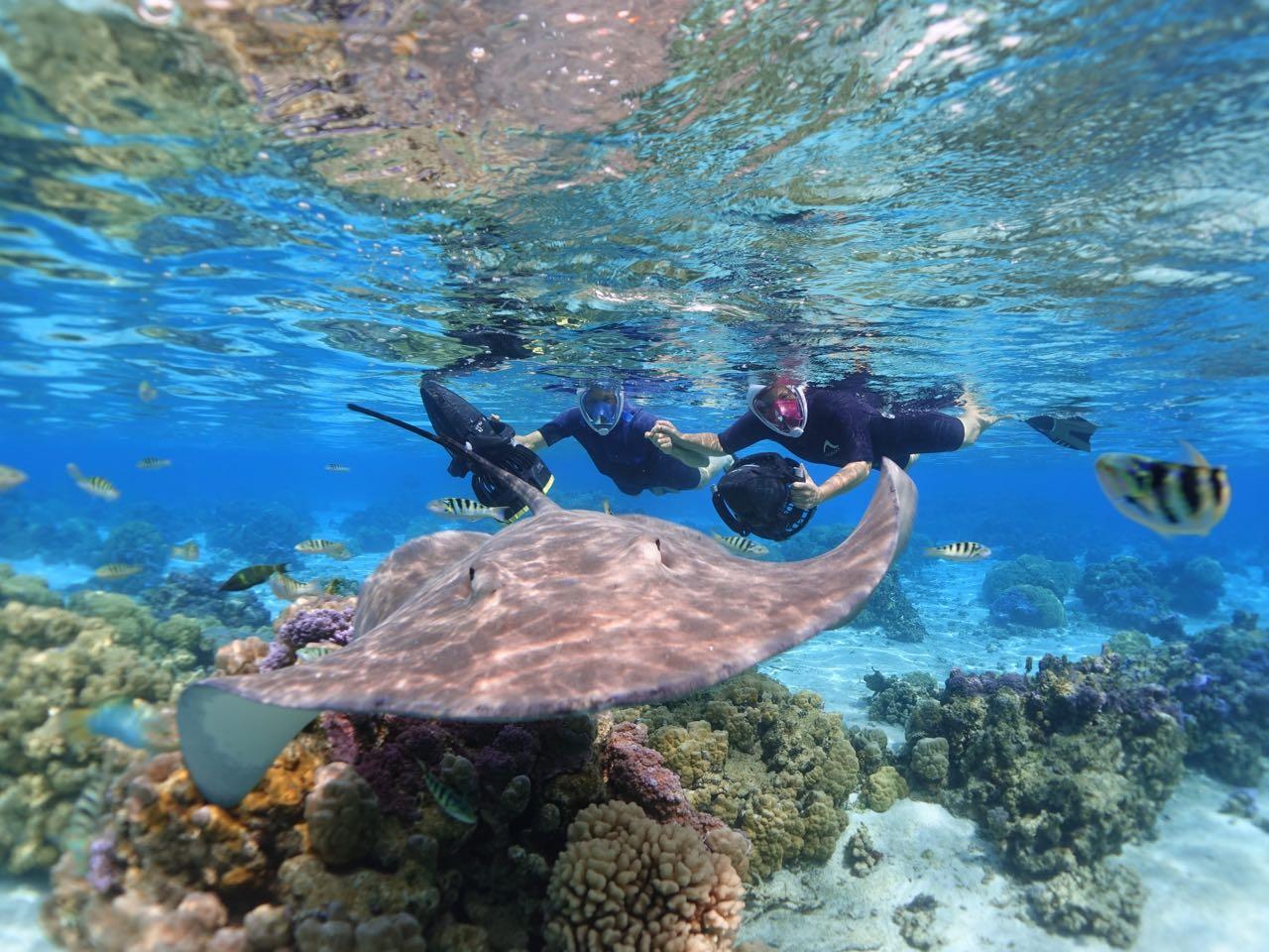 https://tahititourisme.uk/wp-content/uploads/2020/09/Sea-Scooter-Snorkeling-Tour-à-moorea-copie-2.jpg