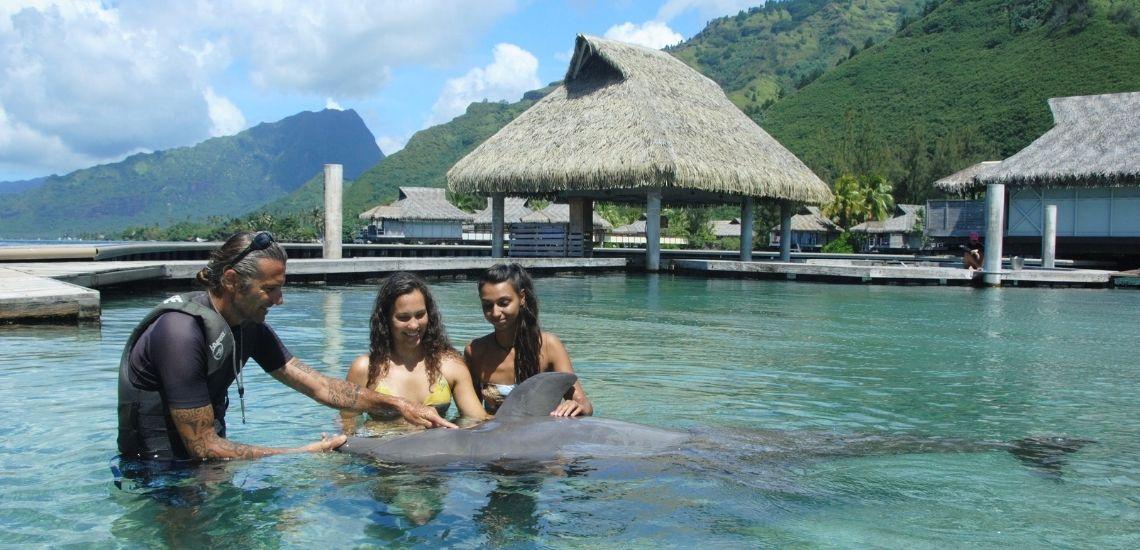 https://tahititourisme.uk/wp-content/uploads/2021/01/Offre_Moorea-Dolphin-Center.jpg